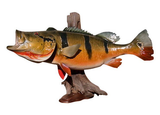 Trophy Fish Replica